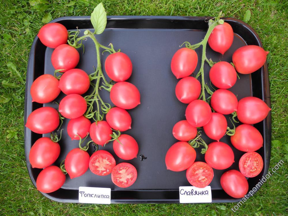 одна звезда, славянка томат отзывы и фото приведенных мною