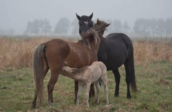 Лучшие породы спортивных лошадей для конкура и особенности содержания