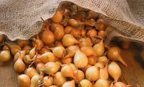 Особенности выращивания лука «штутгартер ризен», отзывы
