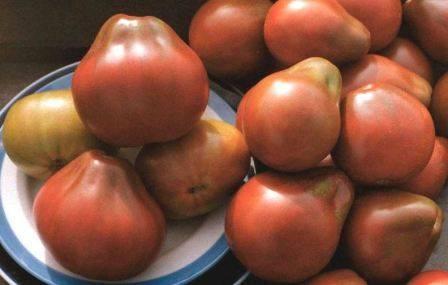 Описание томатов сорта «ананас»: особенности их выращивания в открытом и закрытом грунте
