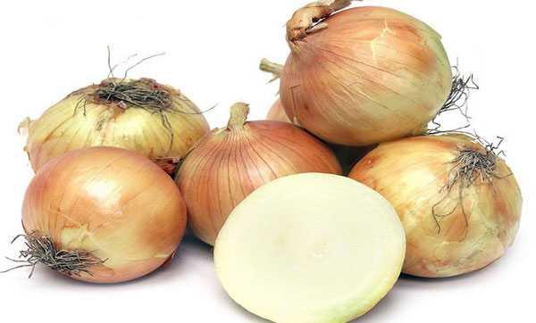 Среднеспелый сорт лука «кармен» со слабоострым вкусом