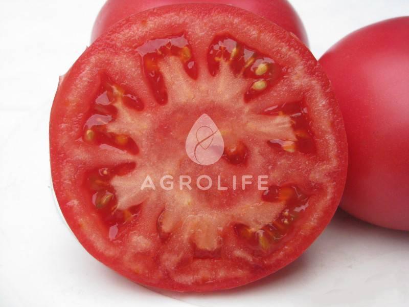 Описание томата фенда, особенности его выращивания
