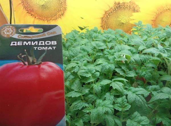 Описание сорта и особенности выращивания томата Супергигант розовый f1