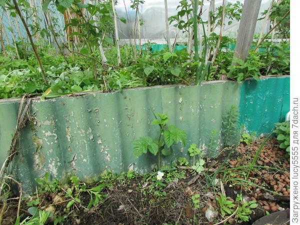 Что можно посадить на участке после малины и рядом на следующий год