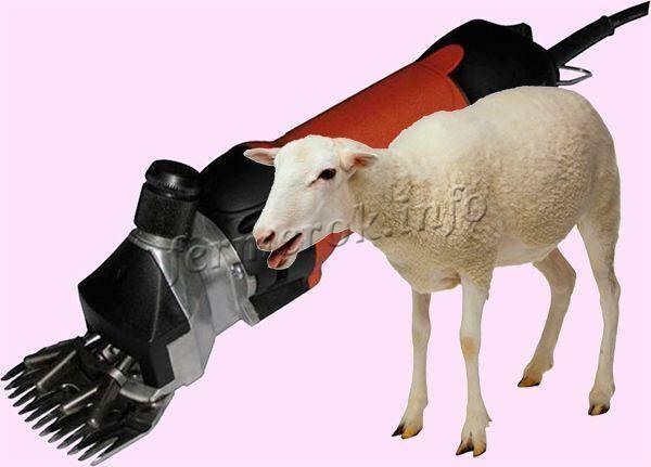 Стрижка овец ручным и машинным методом в домашних условиях