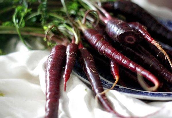 Высокий сахар в крови? вам нужна черная морковь или скорцонера!