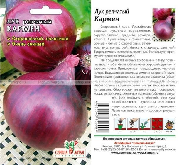Красный лук кармен. описание сорта, посадка севком и семенами