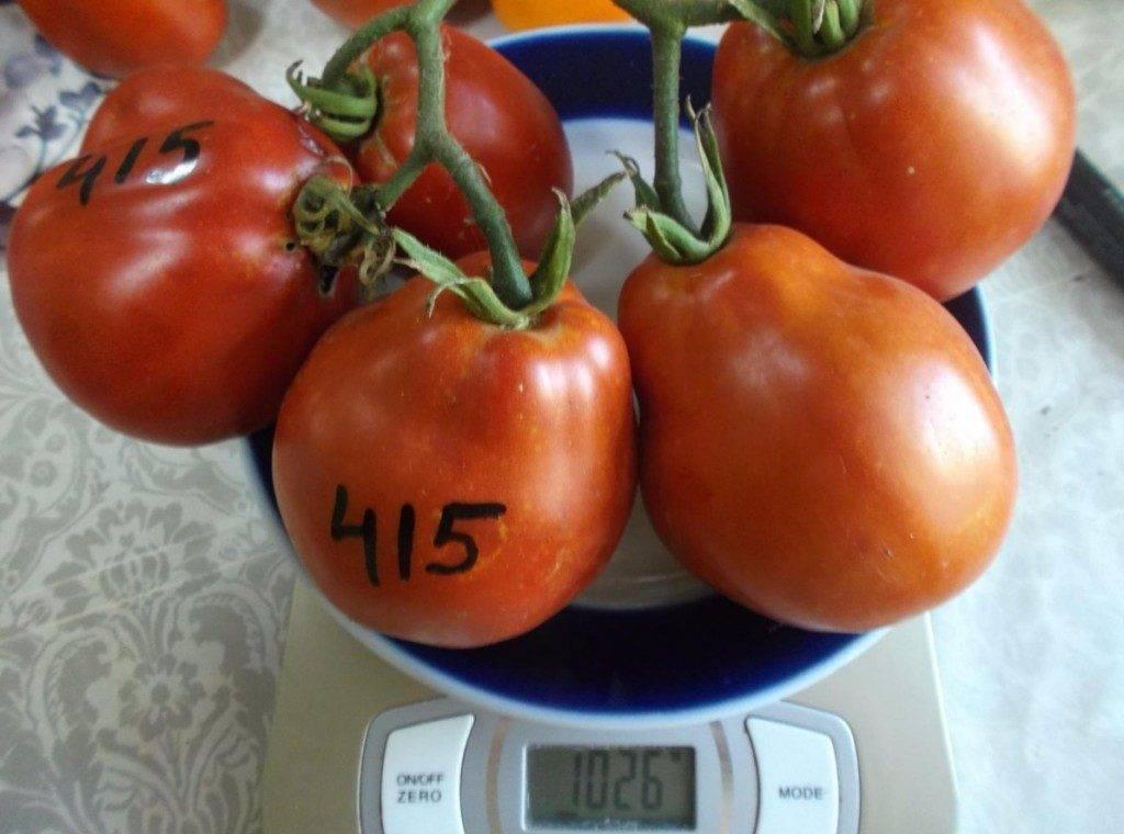 Описание сорта томата тигренок и особенности выращивания