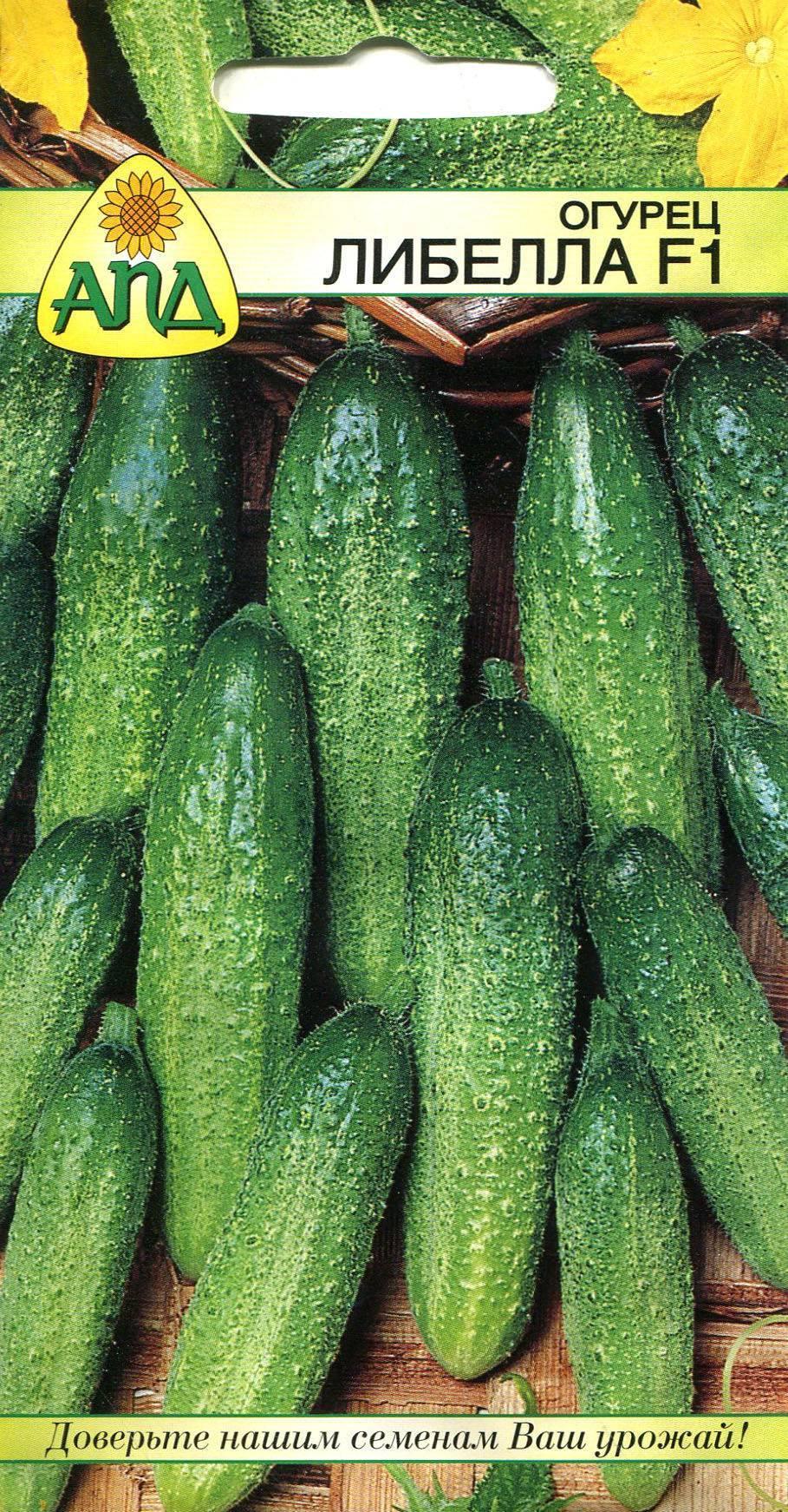 Сорт огурцов либелле ‒ полная характеристика и особенности выращивания