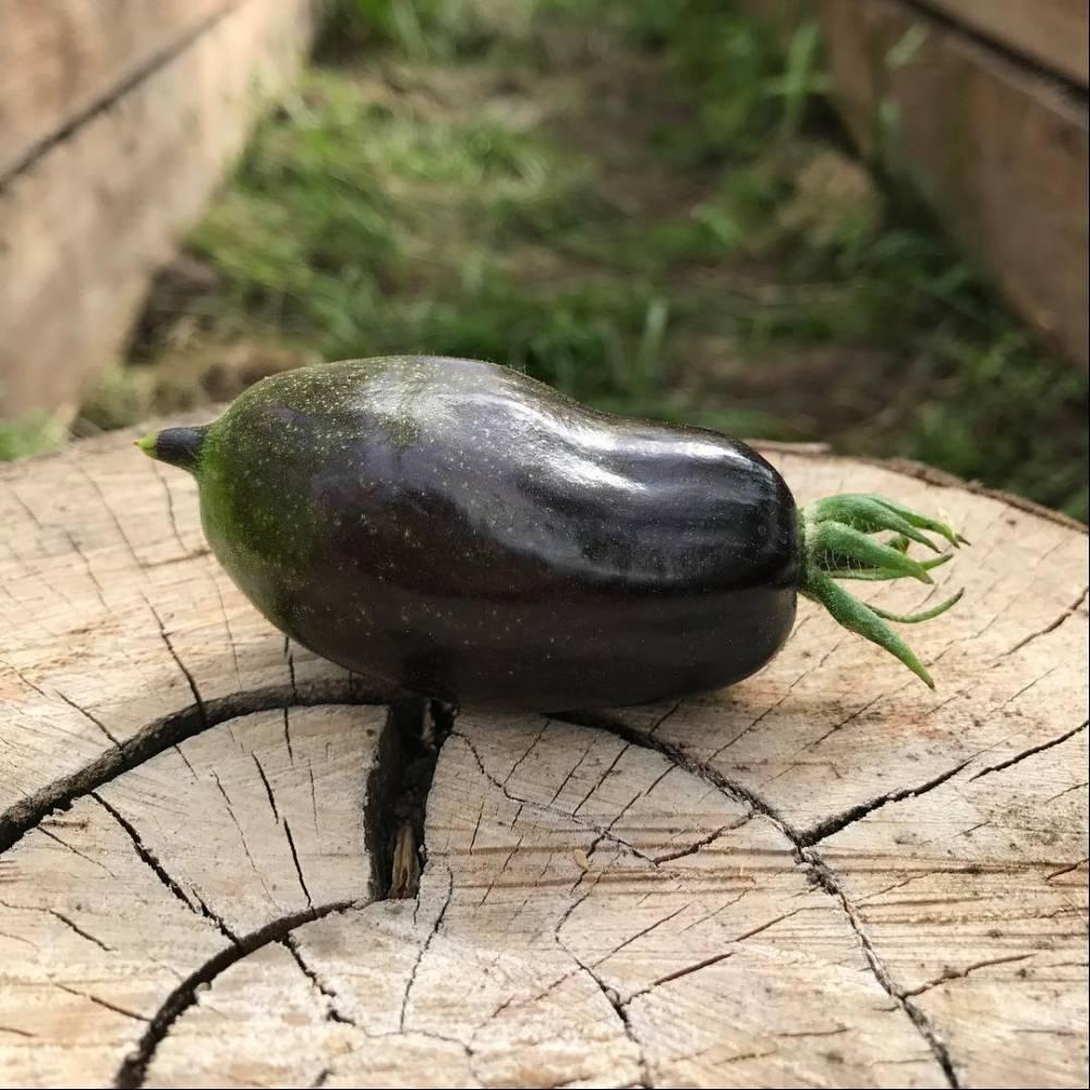Описание томата серии гном бой с тенью, культивирование и выращивание сорта