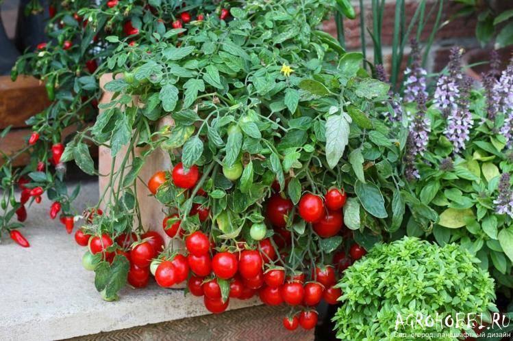 Грядки под помидоры в открытом грунте: виды, фото