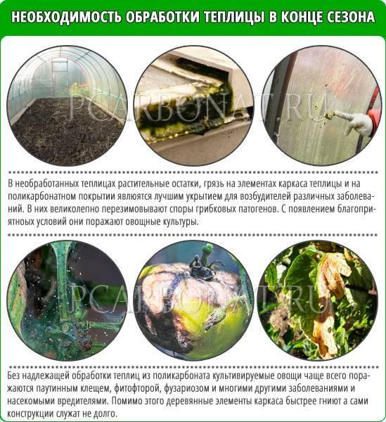Подготовка теплицы весной к посадке томатов: 6 обязательных правил и рекомендации по уходу за саженцами