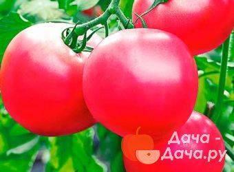 Гибрид производства японских селекционеров — томат «пинк импрешн» и нюансы его выращивания