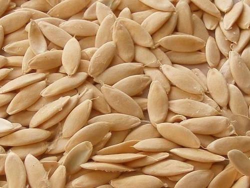 Самостоятельная заготовка семян огурцов и выращивание из них рассады