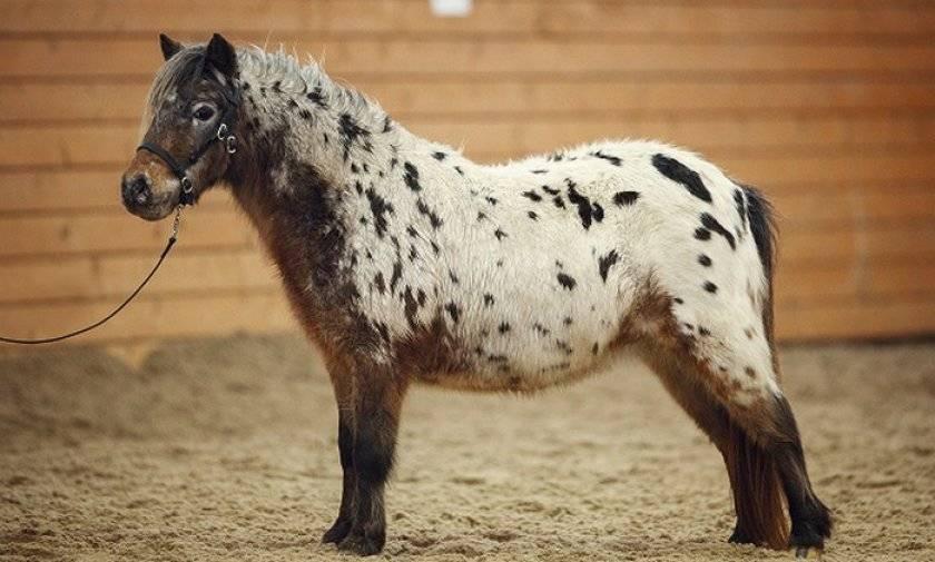 Породы лошадей чалой масти и как их содержать, история и разновидности цвета