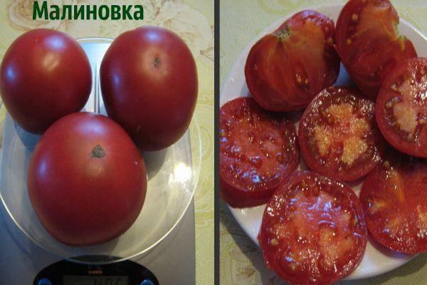 Томат ред робин: описание и характеристика сорта, урожайность с фото