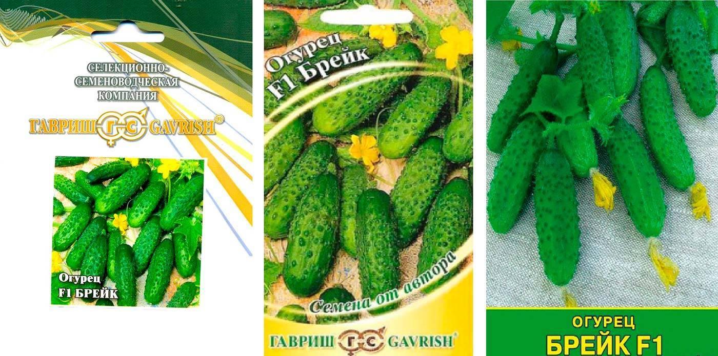 Огурец гоша f1 — ультраранний сорт с хорошей урожайностью