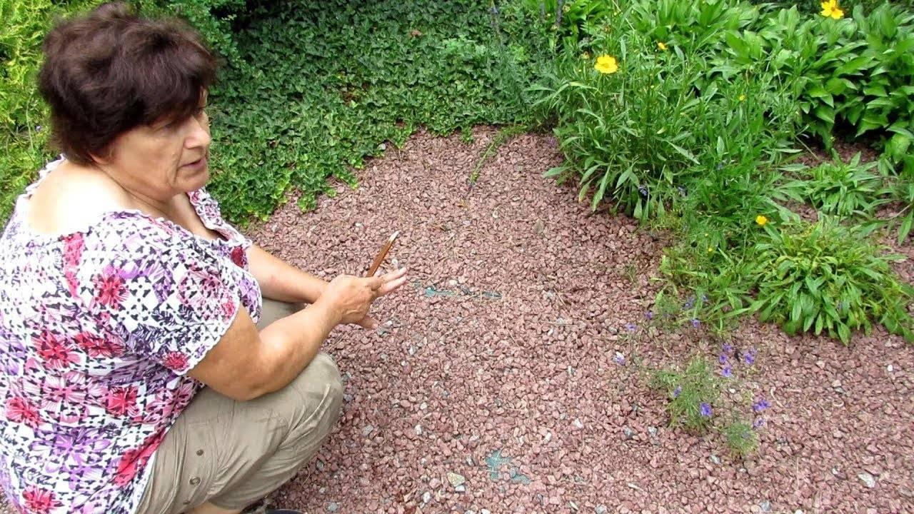 Как избавиться от полевого вьюнка на огороде навсегда: методы и их эффективность