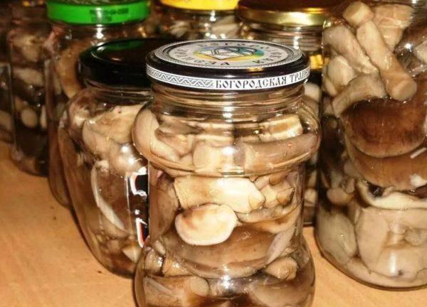 В течение какого периода времени грибы можно употреблять в пищу?